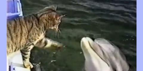 γατούλα - δελφίνια